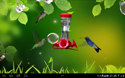 Hummingbirds wallpaper - Android Apps on Google Play
