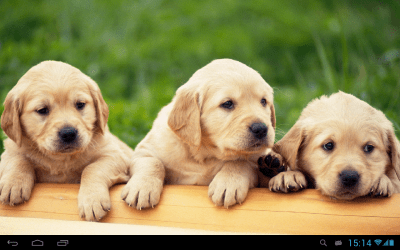 Puppies dogs live wallpaper - Android Apps on Google Play
