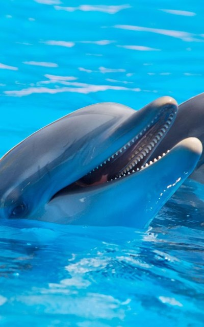 Dolphins Live Wallpaper - Android Apps on Google Play