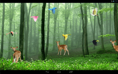 Rain Forest Live Wallpaper - Android Apps on Google Play