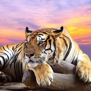 Download Wild Animals HD Live Wallpaper APK on PC | Download Android APK GAMES & APPS on PC