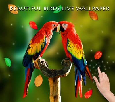 Birds 3D Live Wallpaper - Android Apps on Google Play