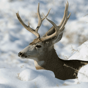Download 3D Deer-Nature Live Wallpaper Google Play softwares - a7qMSV9nhHjI | mobile9