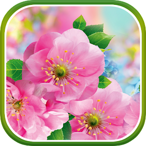 Download Spring Flowers Live Wallpaper Google Play ...