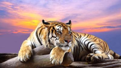 Wild animals Live Wallpaper - Android Apps on Google Play