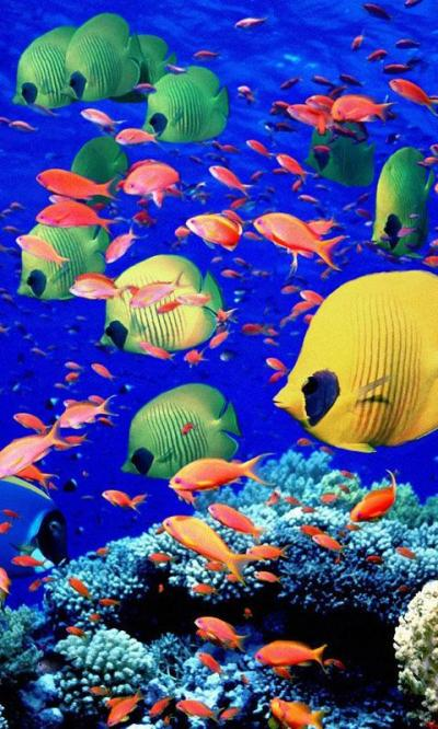 Aquarium Live Wallpapers – Android-Apps auf Google Play