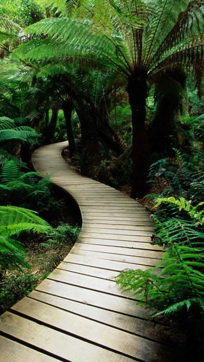 Wood path in the jungle iPhone 5 Wallpaper, Background, 640x1136, Photo, Image | iPhone5 ...
