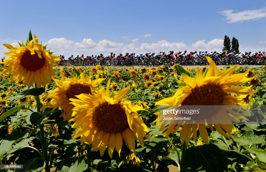 Le Tour de France 2018   Stage Fourteen Photos and Images   Getty Images Peloton   Sunflowers   Landscape   during the 105th Tour de France 2018   Stage 14