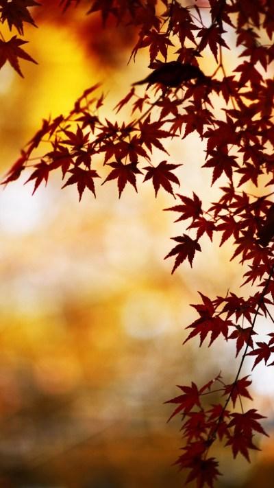 I colori d'autunno esplodono su iPhone e iPad con gli sfondi a tema - Macitynet.it