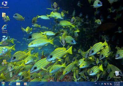 Télécharger Video Wallpaper pour Windows | Shareware
