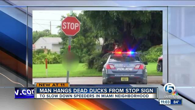 South Florida man hangs dead ducks from stop sign to slow down     South Florida man hangs dead ducks from stop sign to slow down reckless  drivers