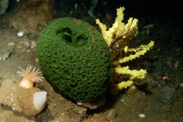 Este pode ser o animal mais antigo da Terra - Mega Curioso