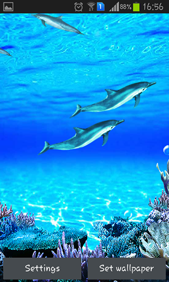 Dolphins sounds live wallpaper for Android. Dolphins sounds free download for tablet and phone.
