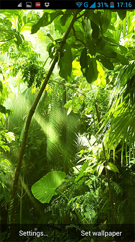 Jungle by LWP World live wallpaper for Android. Jungle by LWP World free download for tablet and ...