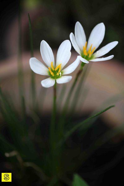 flower | mybigSfarm