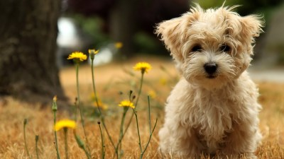 50 Free HD Dog Wallpapers
