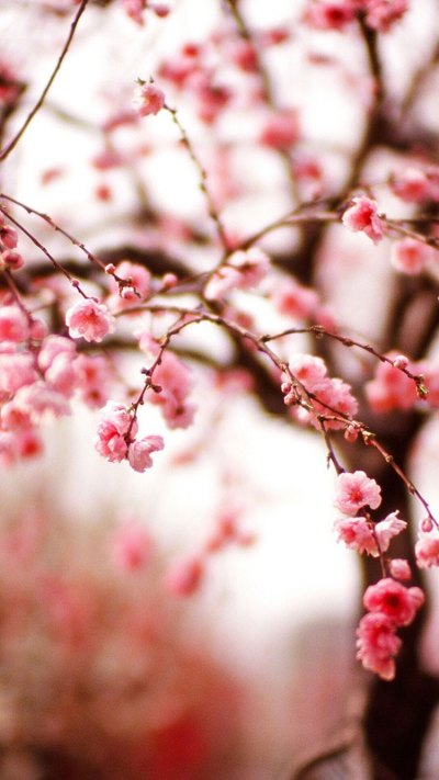 25 Spring iPhone Wallpapers