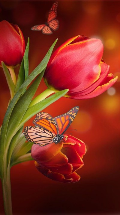 Top 10 Beautiful Flowers Live Wallpapers Apps for Android