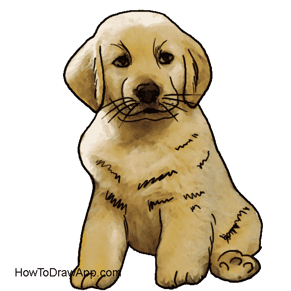 How to draw a cute puppy dog