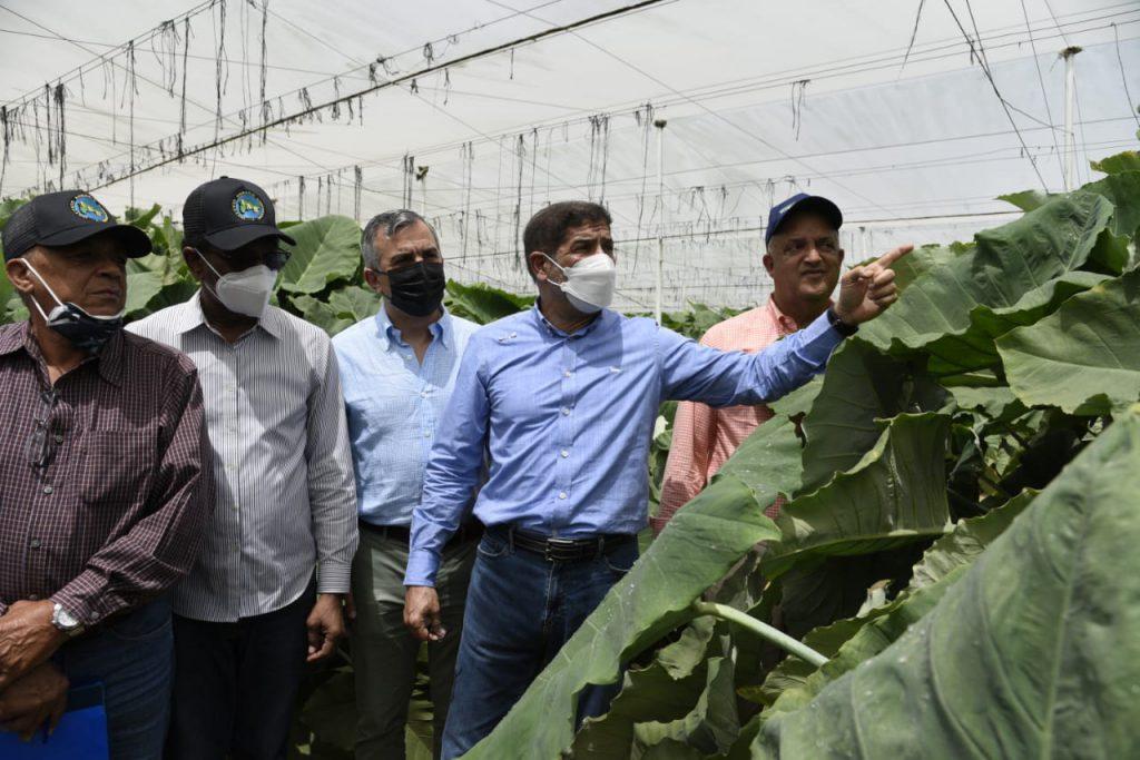 El ministro de Agricultura, Limber Cruz, y el director del Inespre, Iván Hernández adquirirán plátanos y bananos derribados por tornado el sábado