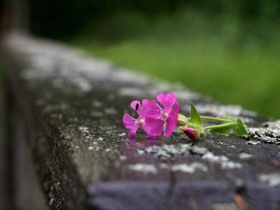 Cveće - Slike za pozadinu - wallpapers