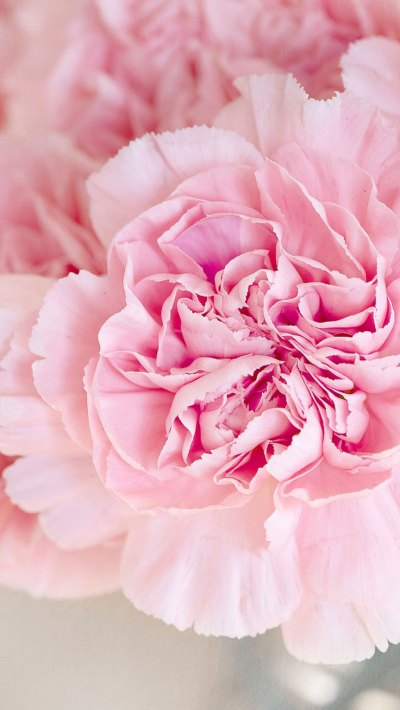 Pink Peonies iPhone Wallpaper Collection | Preppy Wallpapers