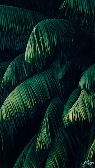 10 Tropical Jungle iPhone X Wallpapers | Preppy Wallpapers