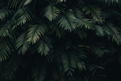 10 Tropical Jungle iPhone X Wallpapers | Preppy Wallpapers