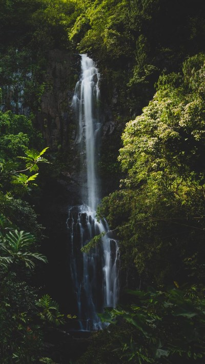Jungle iPhone Wallpaper by Preppy Wallpapers | Preppy Wallpapers