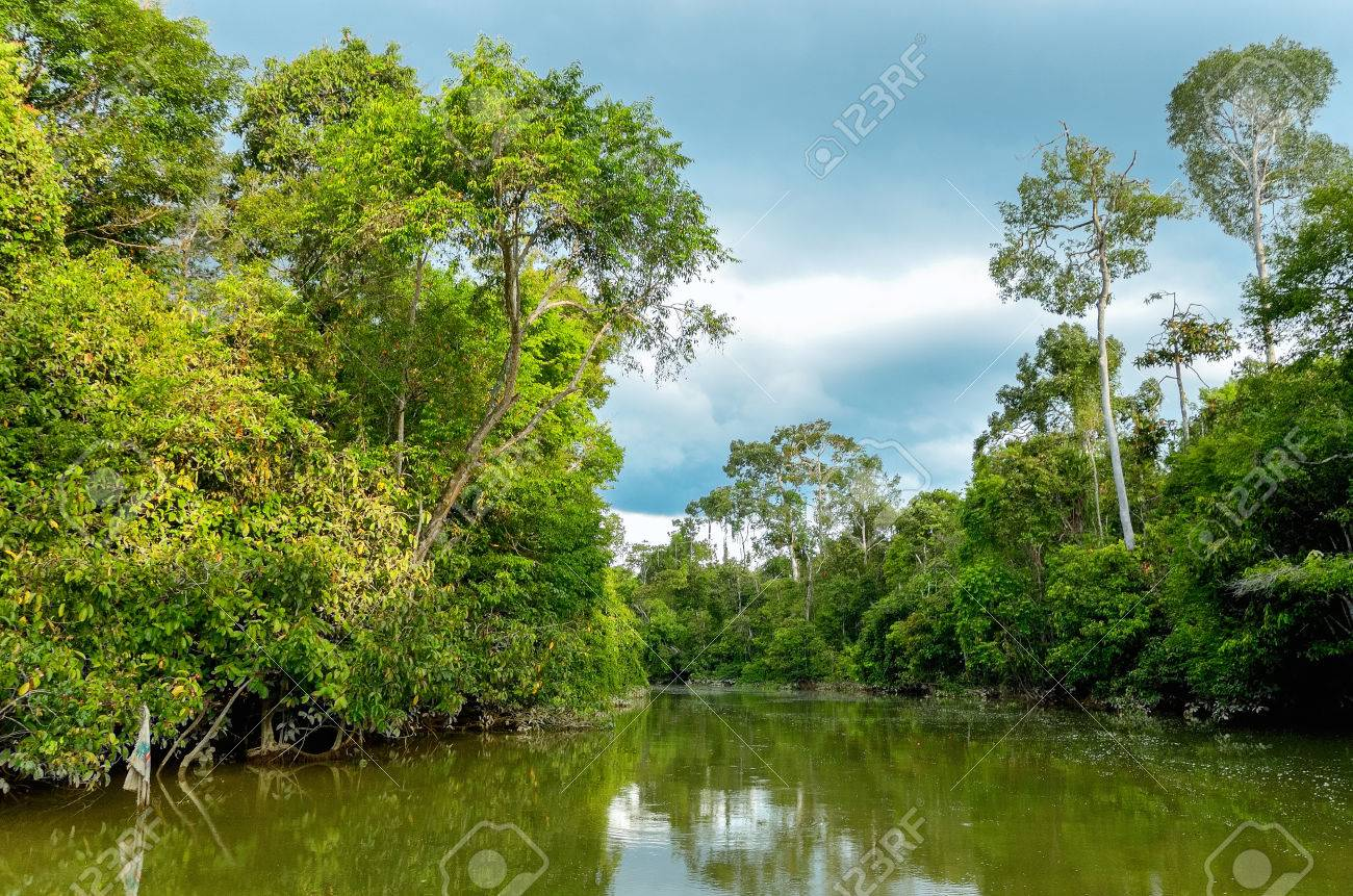 Kinabatangan River  Malaysia  Rainforest Of Borneo Island Stock     Kinabatangan river  Malaysia  rainforest of Borneo island Stock Photo    33869359