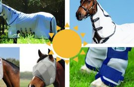 Summer Rugs and Fly Protection for your horse.