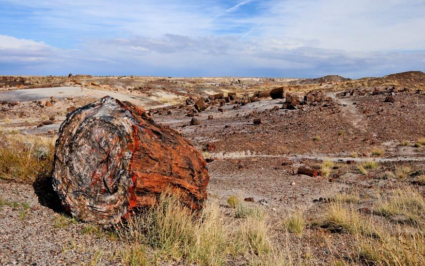 8-petrified-forest-np09