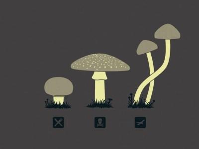 Magic Mushroom Growing Tips   Potent