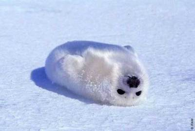 Fotos de animales bebe - Taringa!
