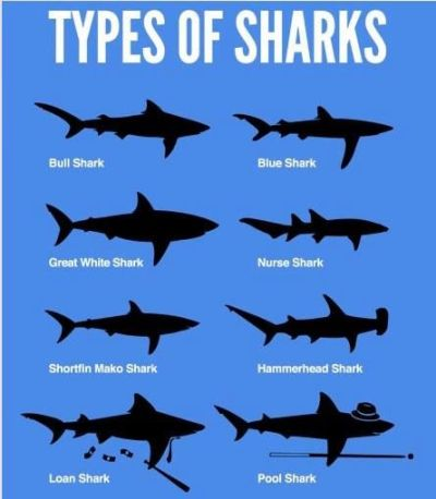 Homepage | Different types of, Different types of sharks and Sharks