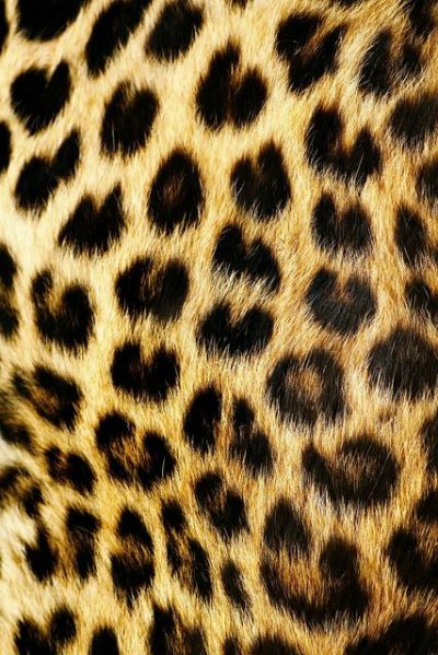 Best 20+ Leopard Print Background ideas on Pinterest