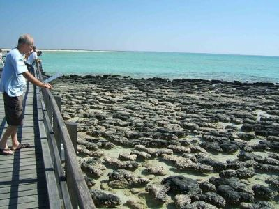 10 best images about Stromatolites on Pinterest | Cats, Warm and Sharks