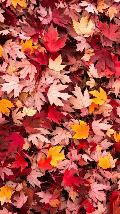 Best 25+ Autumn iphone wallpaper ideas on Pinterest | Fall backgrounds iphone, Iphone wallpaper ...