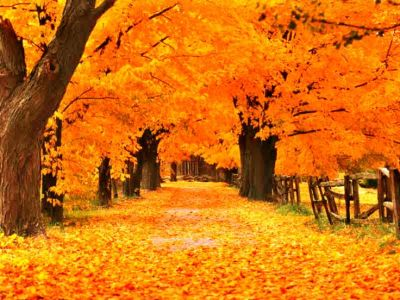 17 Best images about Screensavers on Pinterest | Nature wallpaper, Hallows eve and Merry ...