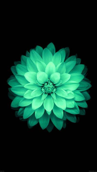 TAP AND GET THE FREE APP! Nature Flowers Mint Beautiful Dark Amazing Girly Stylish Black HD ...