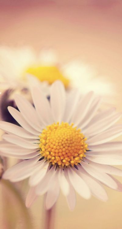 10+ images about Beautiful Flowers wallpapers pictures PC Full HD Wallpapers Desktop Backgrounds ...