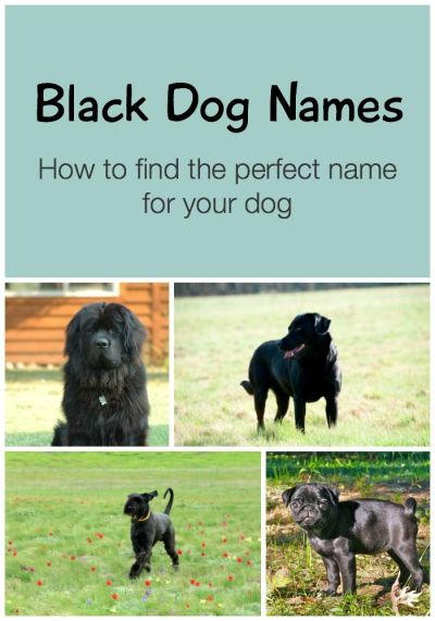 26 best images about Dog Names on Pinterest | Irish, Dog supplies and Best dog food brands