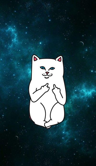 Ripndip iphone wallpaper #ripndip #middle #finger #cat #wallpaper #iphone #galaxy | Ripndip ...