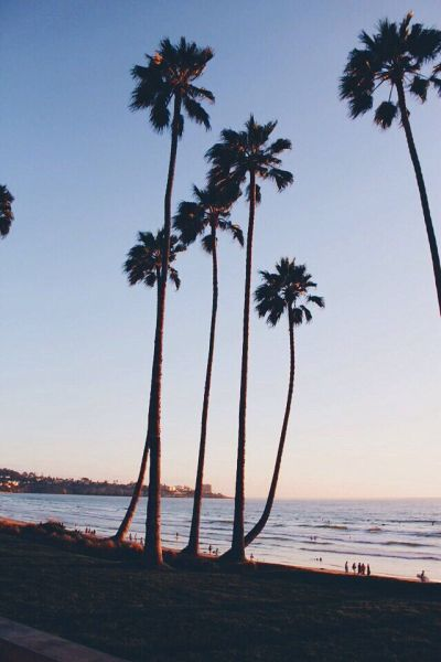 Palm trees sunset iphone wallpaper | Iphone wallpapers | Pinterest | iPhone wallpapers, Trees ...