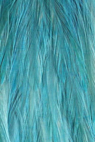 54 best images about Teal on Pinterest | Iphone 5 wallpaper, iPhone backgrounds and Wallpaper ...