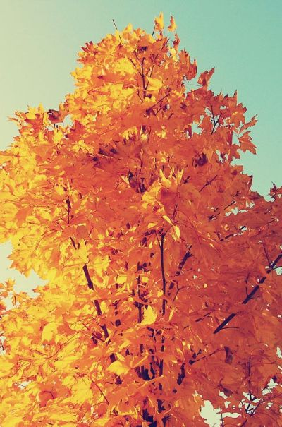 Colorful Autumn Tree Leaves iPhone 6 Plus HD Wallpaper | iPhone Wallpapers | Pinterest | Trees ...