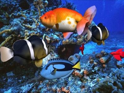 3D Screensaver Sound With Screen Saver   Cool nature screensavers for desktop - Beautiful ...