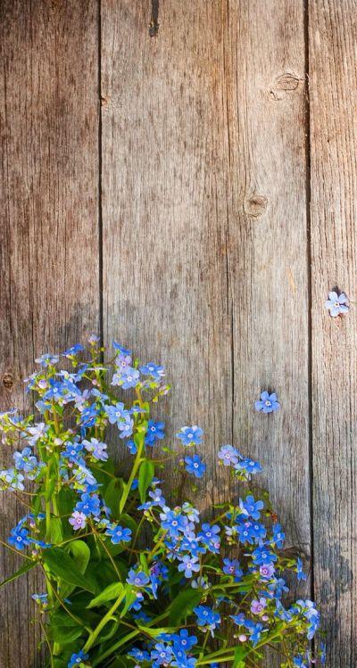 25+ best ideas about Flower Iphone Wallpaper on Pinterest | Screensaver, Flower wallpaper and ...