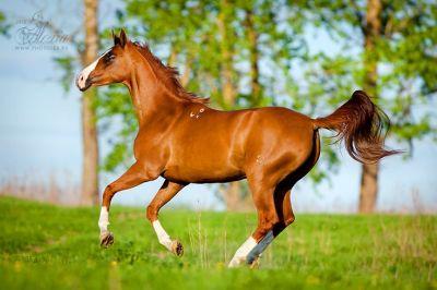 Budyonny - Horse   Horses and Ponys   Pinterest   Horses