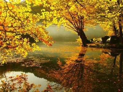 Fall Screensavers And Wallpaper | years wallpapers live chat by liveperson dream autumn ...